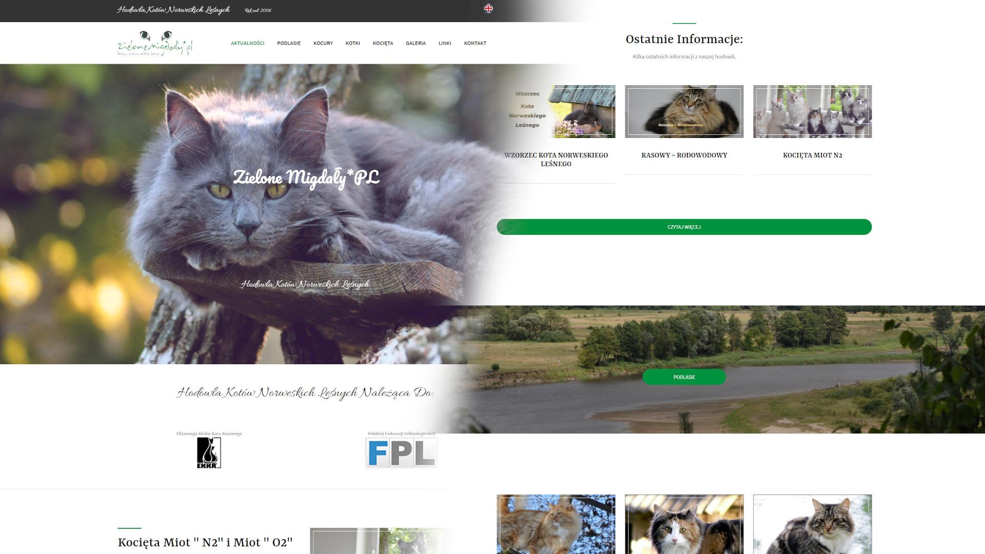 Tworzenie stron internetowych - hodowla kotów